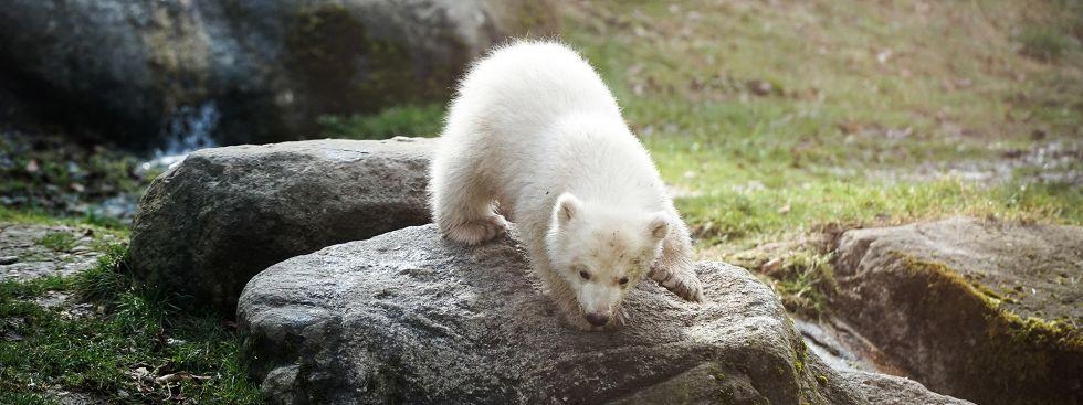 Eisbärenmädchen Quintana