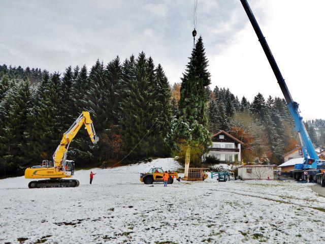 Das Christbaumfällen der Gemeinde Weiler-Simmerberg, Foto: Tourist-Information Weiler-Simmerberg-Ellhofen