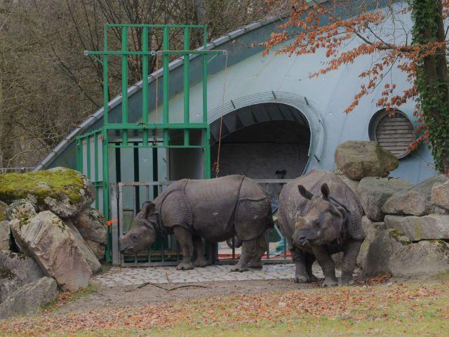 Trasnprotkiste für Puri in Hellabrunn, Foto: Tierpark Hellabrunn