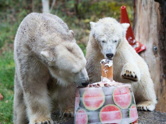 Der Geburtstag von Quintana, Foto: Tierpark Hellabrunn/Marc Müller