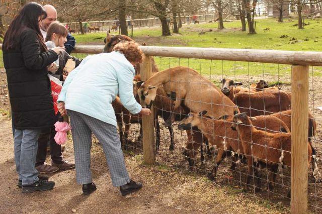 Wildpark Poing Ziegen füttner