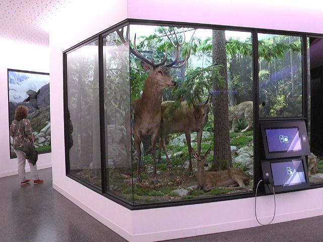 Waldpfad des Jagd- und Fischereimuseums, Foto: Immanuel Rahman