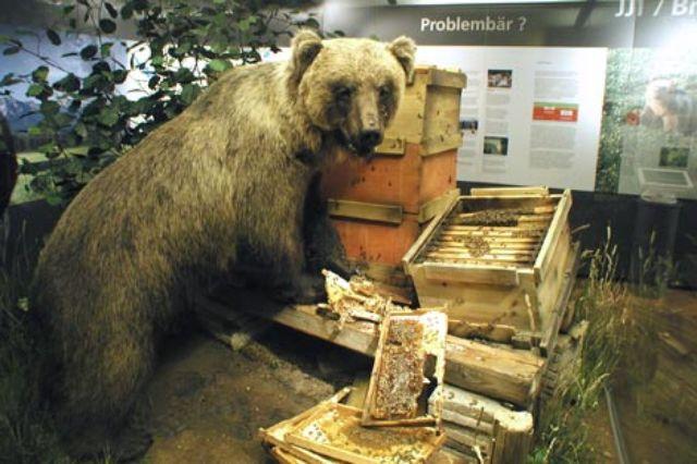 """""""Problem""""- Bär Bruno beim Honigklau"""