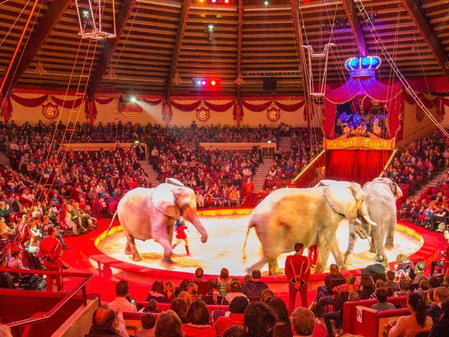 Manege im Circus Krone mit Elefanten, Foto: Circus-Krone.de