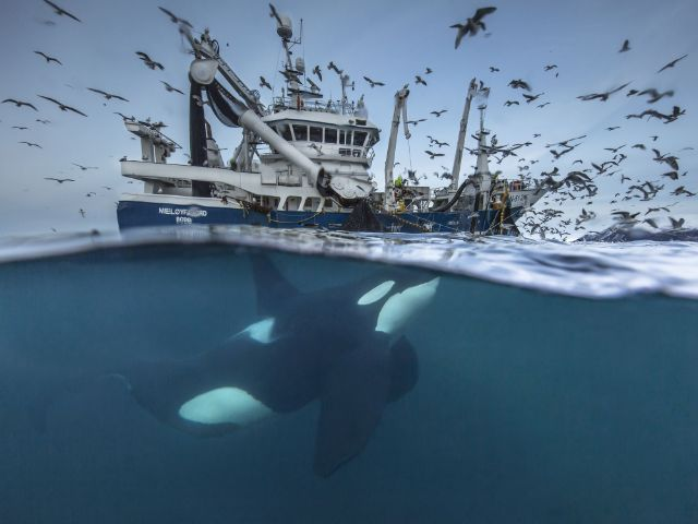 "Bild aus dem Wettbewerb ""Wildlife Photographer of  the Year""."