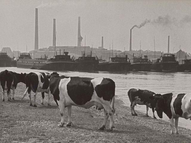 Albert Renger-Patzsch, An der Ruhrmündung bei Duisburg, 1929/30, Foto: lbert Renger-Patzsch / Archiv Ann und Jürgen Wilde / VG Bild-Kunst, Bonn 2016
