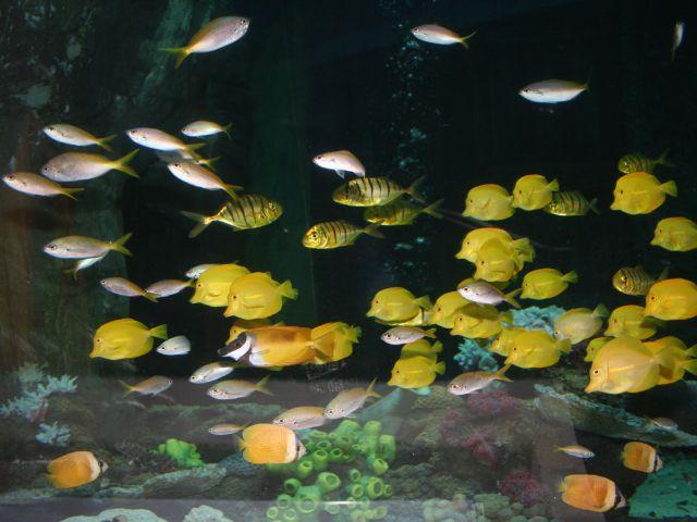 Fischschwarm im Sea Life München.