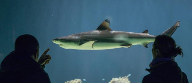 Tierpark Hellabrunn Hai-Umzug