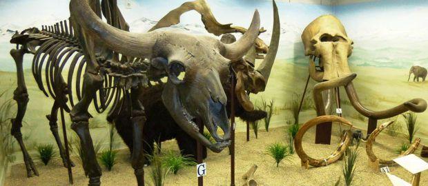 Skelette von Urelefanten im Urzeitmuseum Taufkirchen an der Vils., Foto: Urzeitmuseum