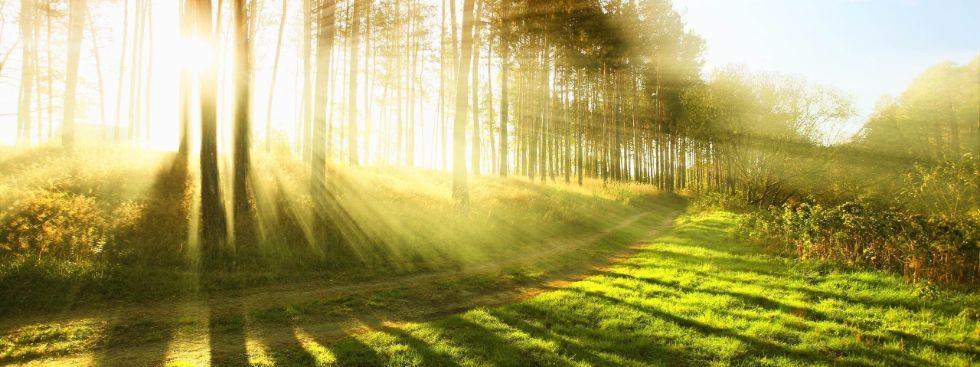 Wald mit durchscheinendem Sonnenlicht