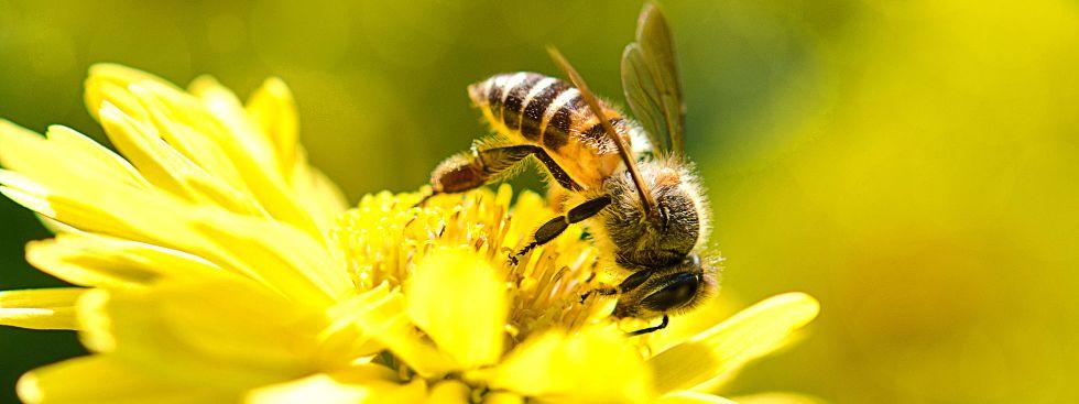 forschungsprojekt im botanischen garten zum flugverhalten von wildbienen das offizielle. Black Bedroom Furniture Sets. Home Design Ideas