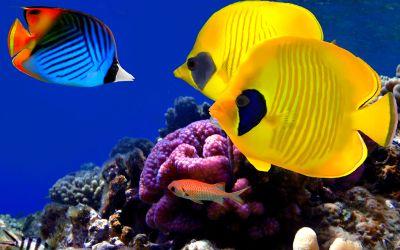 Bunte Fische unter Wasser