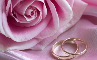 Eheringe neben rosa Rose