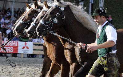 Pferde beim Zentralen Landwirtschaftsfest 2016