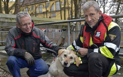 Einsatz der Feuerwehr am Auer Mühlbach: Hund gerettet