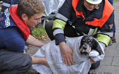 Die Feuerwehr München rettet einen Hund aus der Isar.