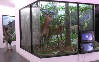Waldpfad des Jagd- und Fischereimuseums