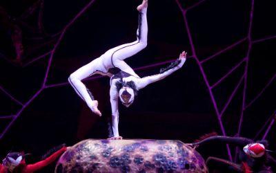 Cirque du soleil Programm Ovo