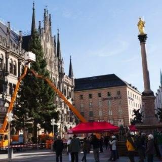 The 2016 Christmas tree on Marienplatz