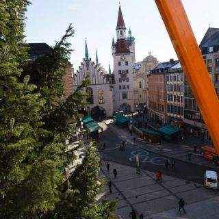 Der Christbaum auf dem  Marienplatz 2016
