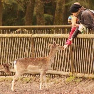 Bilder vom Wildpark Poing