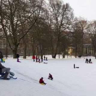 In den Maximiliansanlagen mit direktem Blick auf das Maximilianeum kann mitten durch den Park gerodelt werden. So mancher Baum steht etwas im Weg, ist aber mit Strohballen geschützt. Hier haben Jung und Alt einen Riesenspaß.