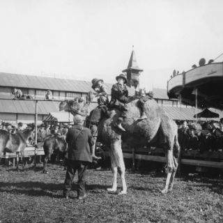 Das Oktoberfest von 1900-1972