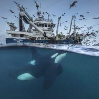 Spektakuläre Eindrücke aus dem Wettbewerb für Naturfotografie