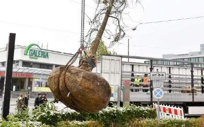 Baumpflanzung vor dem OEZ in München.