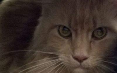 Katze, die am Münchner Hauptbahnhof gefunden wurde.