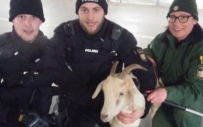 Polizisten mit der Ziege in der Allianz Arena.