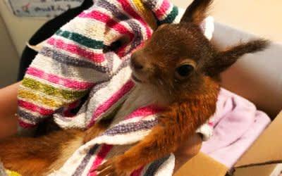 Das gerettete Eichhörnchen Nino