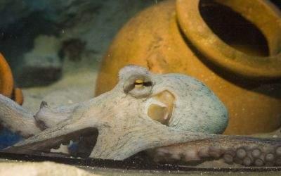 Oktopus SeaLife