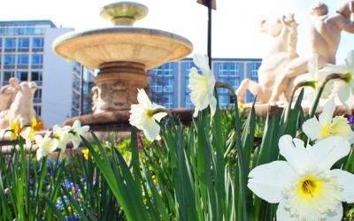 Frühling in der Innenstadt am Brunnen am Lenbachplatz