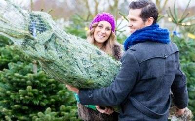 Pärchen trägt Weihnachtsbaum