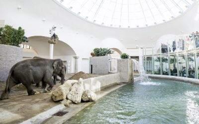 Eröffnung des fertig gestellten Elefantenhauses im Tierpark Hellabrunn: Innenansicht