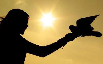Friedenstaube fliegt in die Hände eines Mädchens