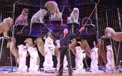 Raubtiernummer im Circus Krone mit Martin Lacey