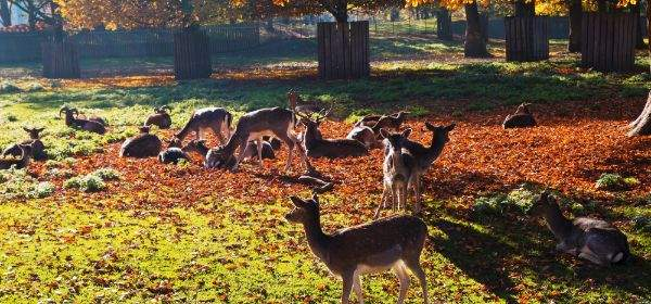 Hirschgarten im Herbst